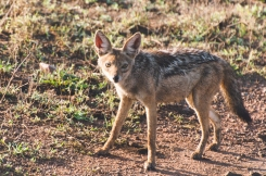serengeti-south-064