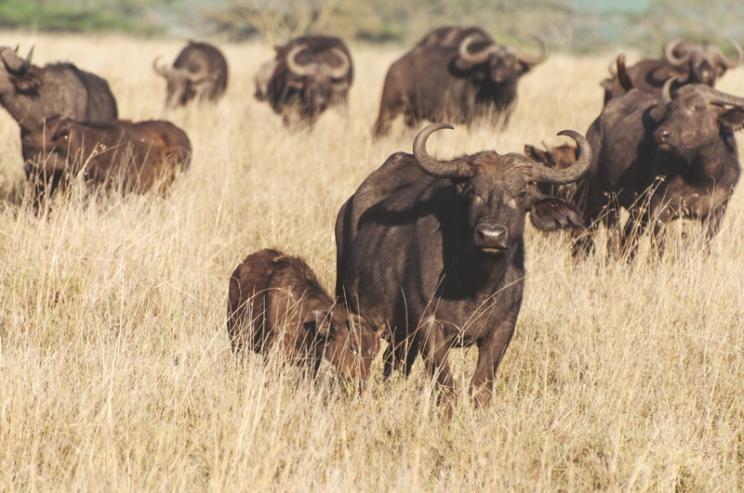 serengeti-south-065