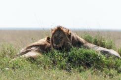 serengeti-south-068