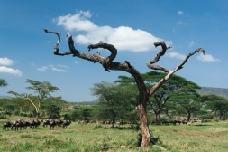 serengeti-south-069