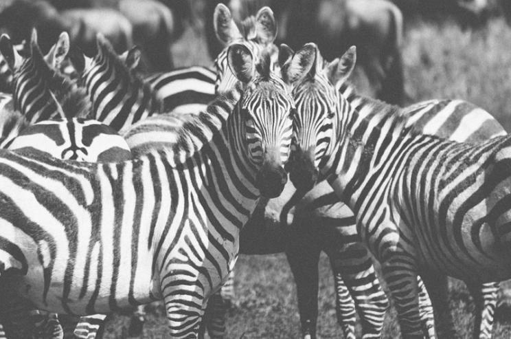 serengeti-south-070