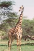 serengeti-south-071