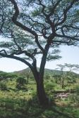serengeti-south-072