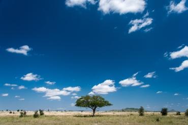serengeti-south-076