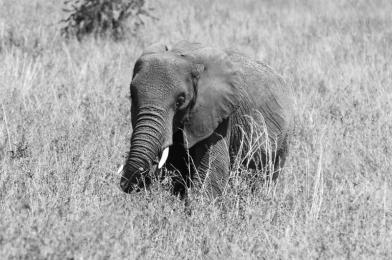 serengeti-south-077
