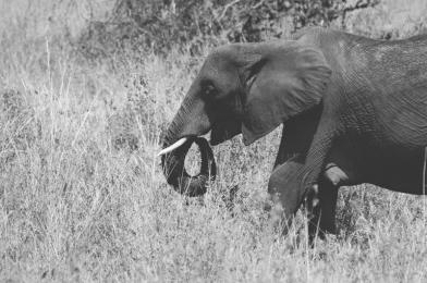 serengeti-south-078