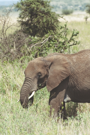 serengeti-south-079