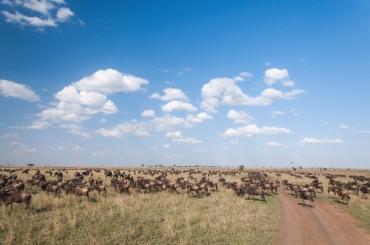 serengeti-south-089