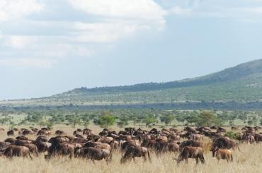 serengeti-south-090