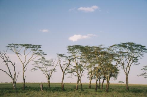 serengeti-south-098