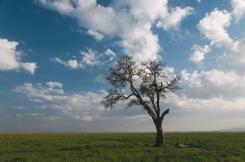 serengeti-south-100
