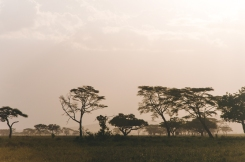 serengeti-south-101