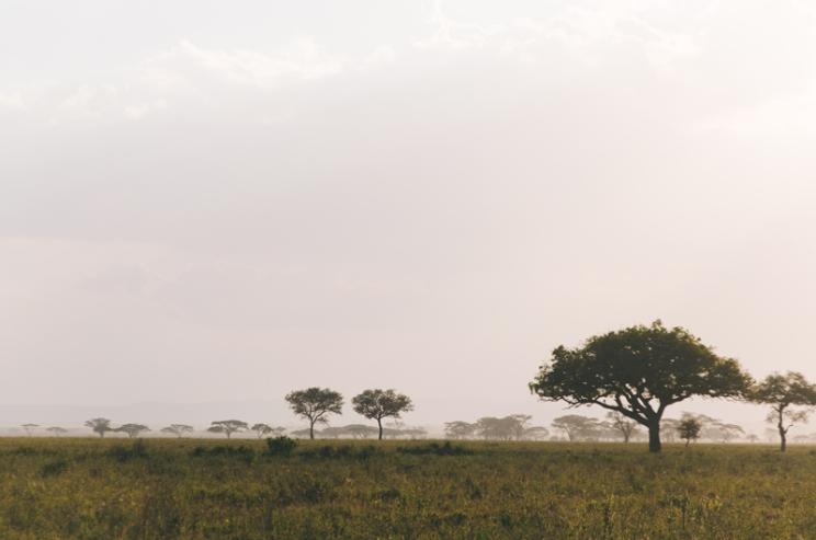serengeti-south-102