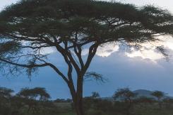 serengeti-south-106