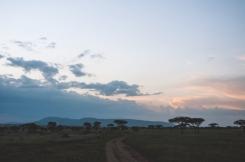serengeti-south-107
