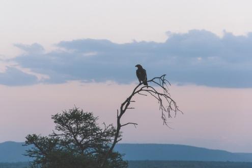 serengeti-south-108