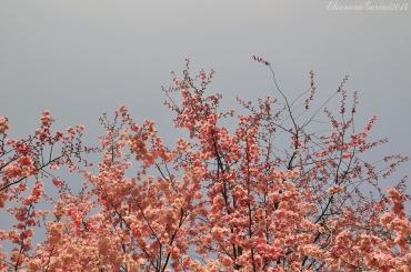 hanami-2014-05