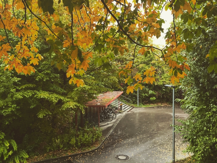 fall2015-07
