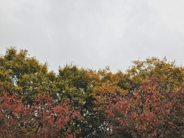 fall2015-37