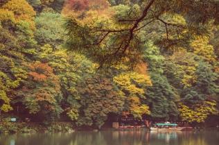 kyoto-arashiyama-27