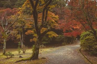 kyoto-arashiyama-37