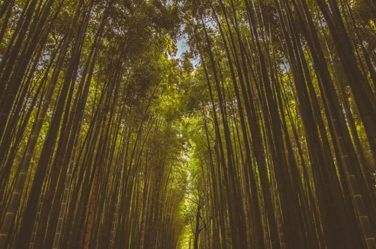 kyoto-arashiyama-45