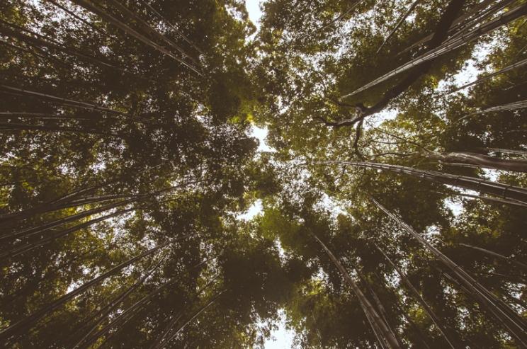 kyoto-arashiyama-48