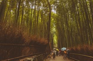 kyoto-arashiyama-50