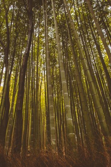 kyoto-arashiyama-51