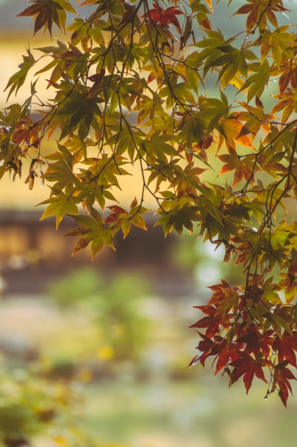 kyoto-kinkakuji-21