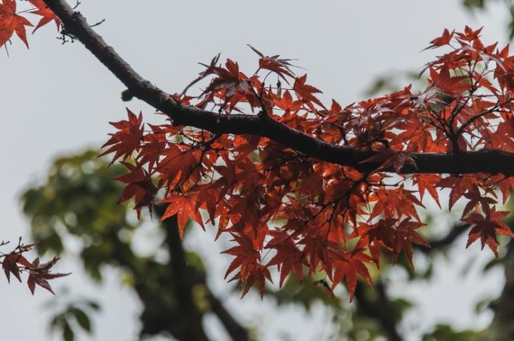 kyoto-kiyomizudera-16