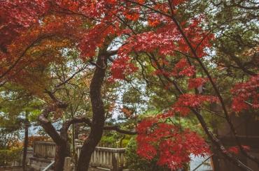 kyoto-kiyomizudera-17