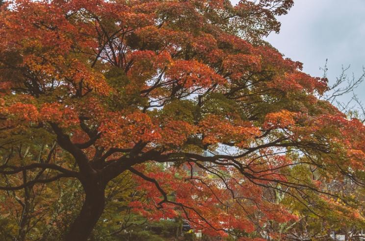 kyoto-kiyomizudera-60