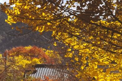 kyoto-ohara-034