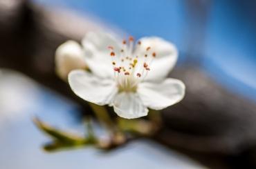 spring2016-04