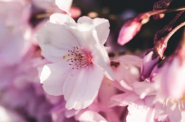 spring2016-42