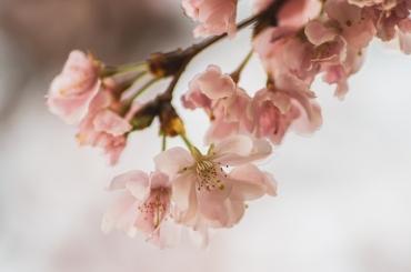 spring2016-52