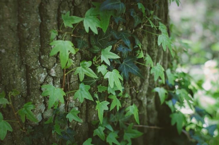 kari-wood-21