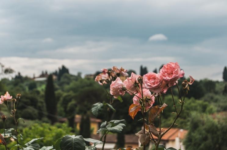 tuscany-2016-100