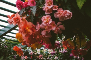 butchart-gardens-02