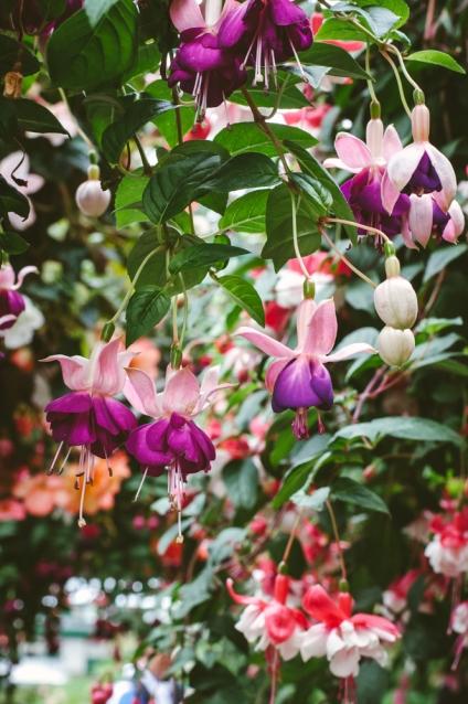 butchart-gardens-03