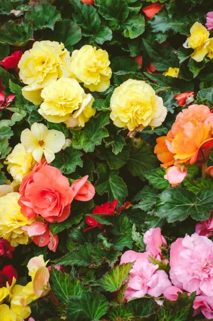 butchart-gardens-04