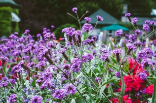 butchart-gardens-06
