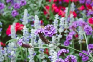 butchart-gardens-07