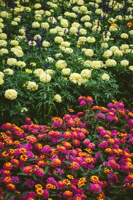 butchart-gardens-12