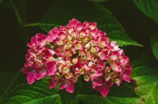 butchart-gardens-15