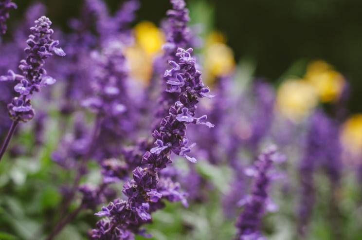 butchart-gardens-31