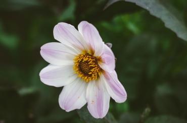 butchart-gardens-34
