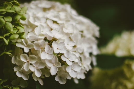 butchart-gardens-53