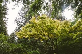 butchart-gardens-58